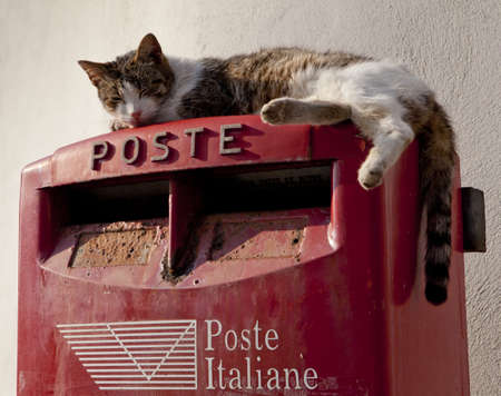 A cat on top of a postbox in Sicily, Italy Stock Photo - 18811197