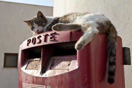 A cat on top of a postbox in Sicily, Italy Stock Photo - 18811354
