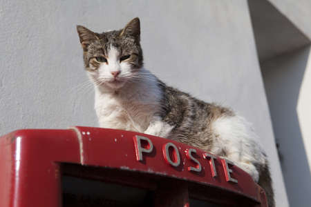 A cat on top of a postbox in Sicily, Italy