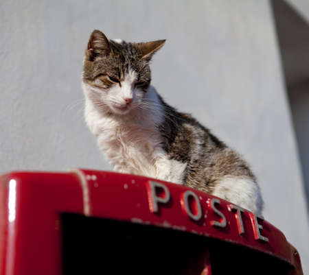 A cat on top of a postbox in Sicily, Italy Stock Photo - 18811135