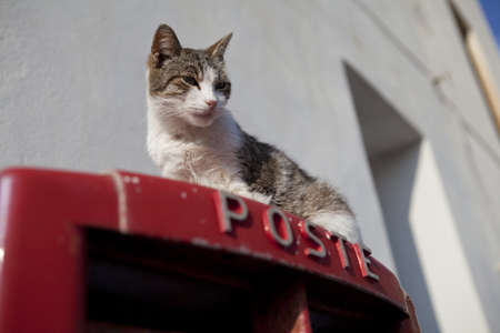 A cat on top of a postbox in Sicily, Italy Stock Photo - 18811139