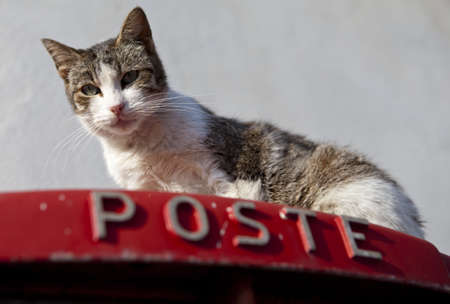 A cat on top of a postbox in Sicily, Italy Stock Photo - 18811136