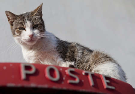 A cat on top of a postbox in Sicily, Italy Stock Photo - 18811137
