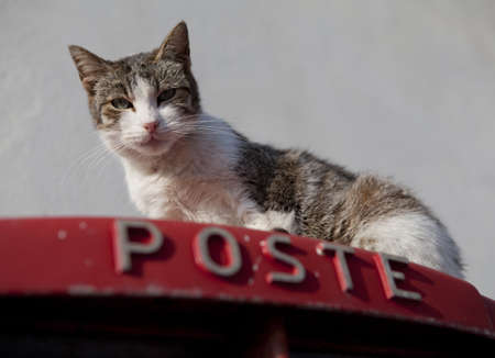 A cat on top of a postbox in Sicily, Italy Stock Photo - 18811141