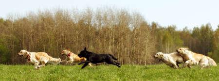 녹색 계곡을 통해 여름에 달리는 많은 수의 개 추종자