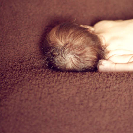thick hair: The head of the newborn, turned backwards, thick hair baby,