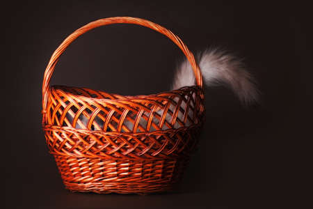 'hide out': Cute young kitten having fun playing hide and seek, The cat hid in a basket sticking out of one tail.