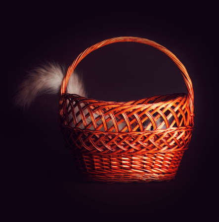 Cute young kitten having fun playing hide and seek, The cat hid in a basket sticking out of one tail.