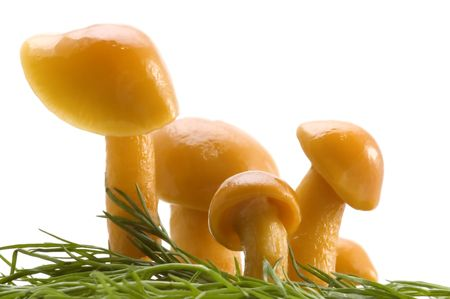 series object on white - food pickled mushrooms Imagens