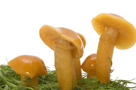 series object on white - food - yellow mushrooms Banco de Imagens
