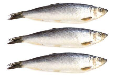 object on white - fish herring close up Standard-Bild