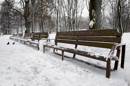 empty bench in Winter Park in the Moscow photo