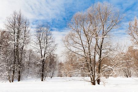 Foresta invernale fredda nel pomeriggio coperta di neve