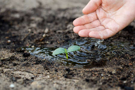 womans: Womans hand watering the soil of young plant.