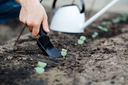plant hand: Gardeners hand transplanting a young plant with shovel.