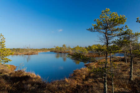 bogs: Beauty of nature in latvian swamp area, tourist place.