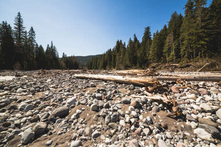 riverbed: Bottom view of dry riverbed in spring and green forest  away. Stock Photo