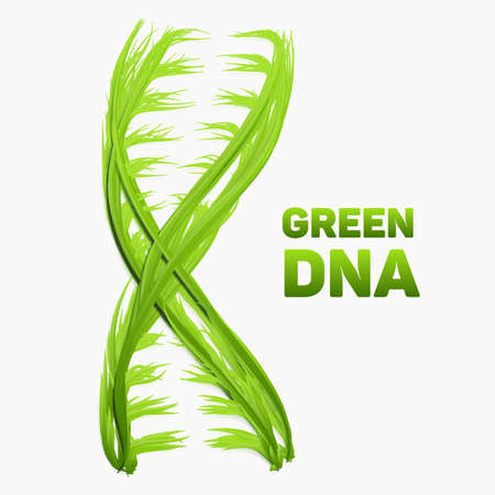 Vector abstract DNA strand as green grass. Conceptual health and ecology medical illustration. Double helix as vibrant green grass molecule. Genom structure. Natural life symbol.