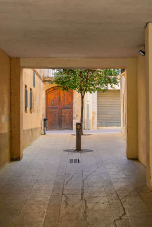 Tree grow in patio of old building in the village Arbos del Panades . The town is a located in the province of Tarragona