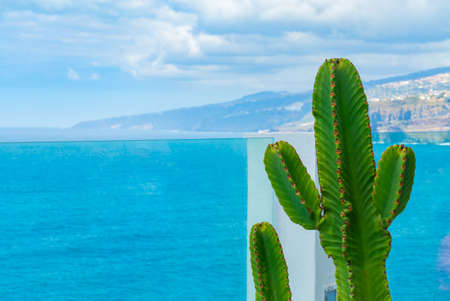 Cactus growing on the balcony behind glass railing over the ocean. Sea with small waves on the background.