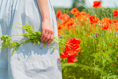 Closeup of young beautiful woman holds a poppy bouquet in her hands in a poppy field on sunny summer day