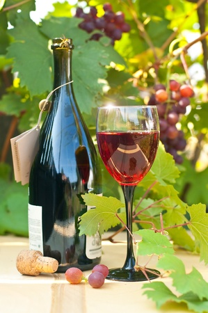 epicurean: Red wine glass on a wooden table against a grapevine and wasp