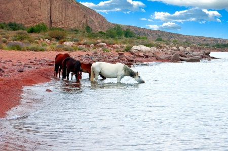 Horses herd drink water from lake under the dark blue sky photo