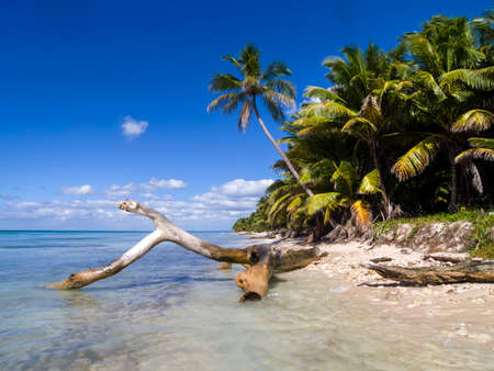 A Caribbean beach showing driftwood, palm trees and a clear blue sky.