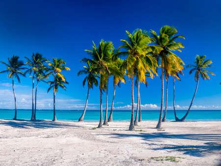 A Caribbean beach showing a line of palm trees on a white sandy beach with deep blue sky an azure sea.