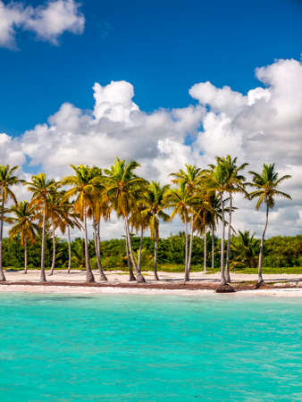 A line of exotic palm trees on a Caribbean beach showing white sand and deep blue sky with azure sea.