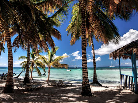 A relaxing shady part of a Caribbean beach showing azure sea deep blue sky and cooling palm trees.