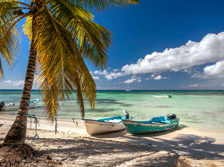 Exotic palm trees on a Caribbean beach showing white sand and deep blue sky with azure sea and moored boats.