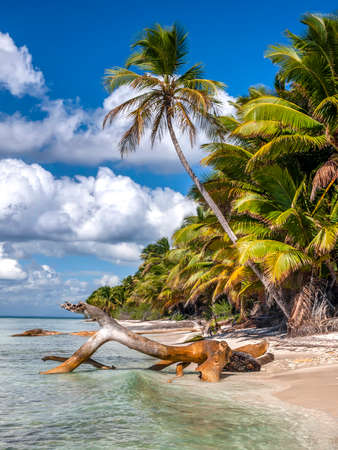 Vertical shot of Exotic palm trees on a Caribbean beach with some drift wood . Stock fotó