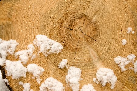 Growth rings on the end of a sawn log photo