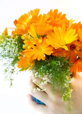 Bunch of flowers on the white background Stock Photo - 5948836