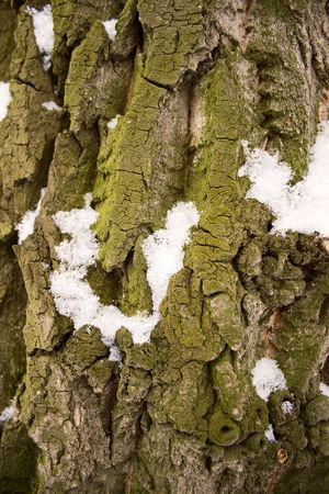 Close up view of wood bark. photo