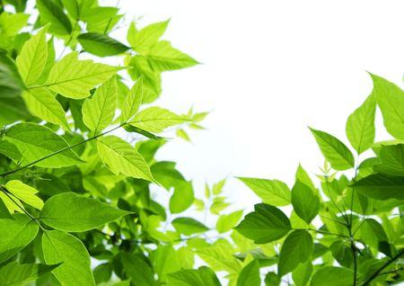 bladeren: Groene bladeren