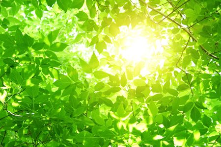 fresh morning: Green leaves Stock Photo