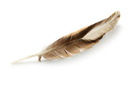Feather isolated on the white background Stock Photo - 7585685