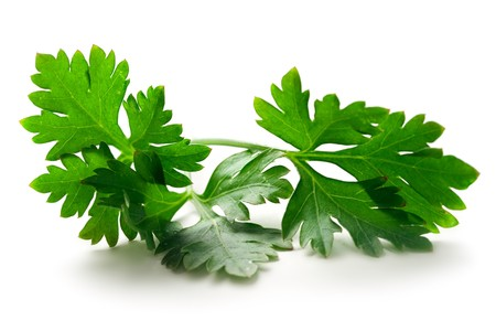 garnish: Fresh parsley isolated on white Stock Photo