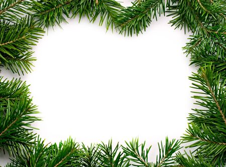 Fir isolated on white photo