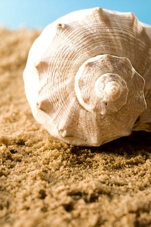 Seashell in sand photo