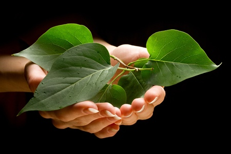 Hands holding leafs Stock Photo - 10681730