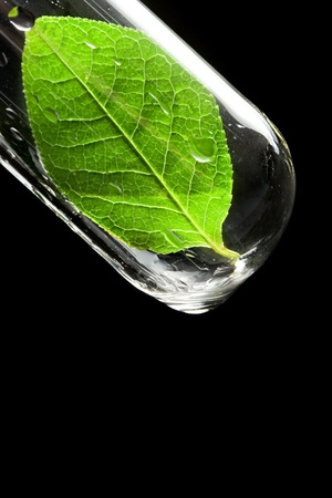 Test tube with leaf  Stock Photo