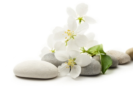 Apfelbaum Blumen und Steine