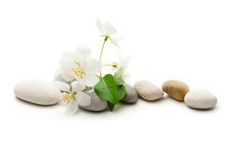 リンゴの木の花と石