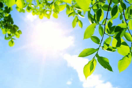 tree with leaves: Green leaves with sun ray