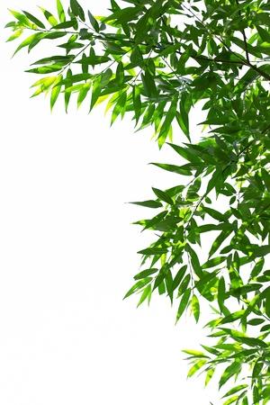 Junge grüne Blätter im Sommer morgens