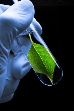 Hand in Hand halten Reagenzglas mit Pflanzen