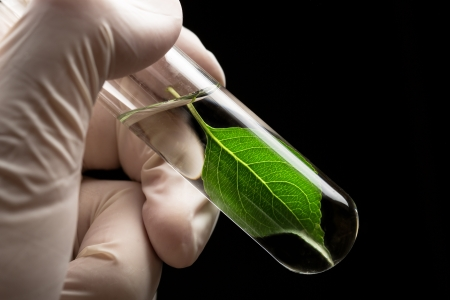 Hand in glove holding test tube with plant photo